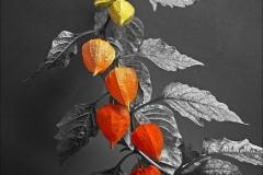 Shades of Maturity - Chris Sanderson - 20