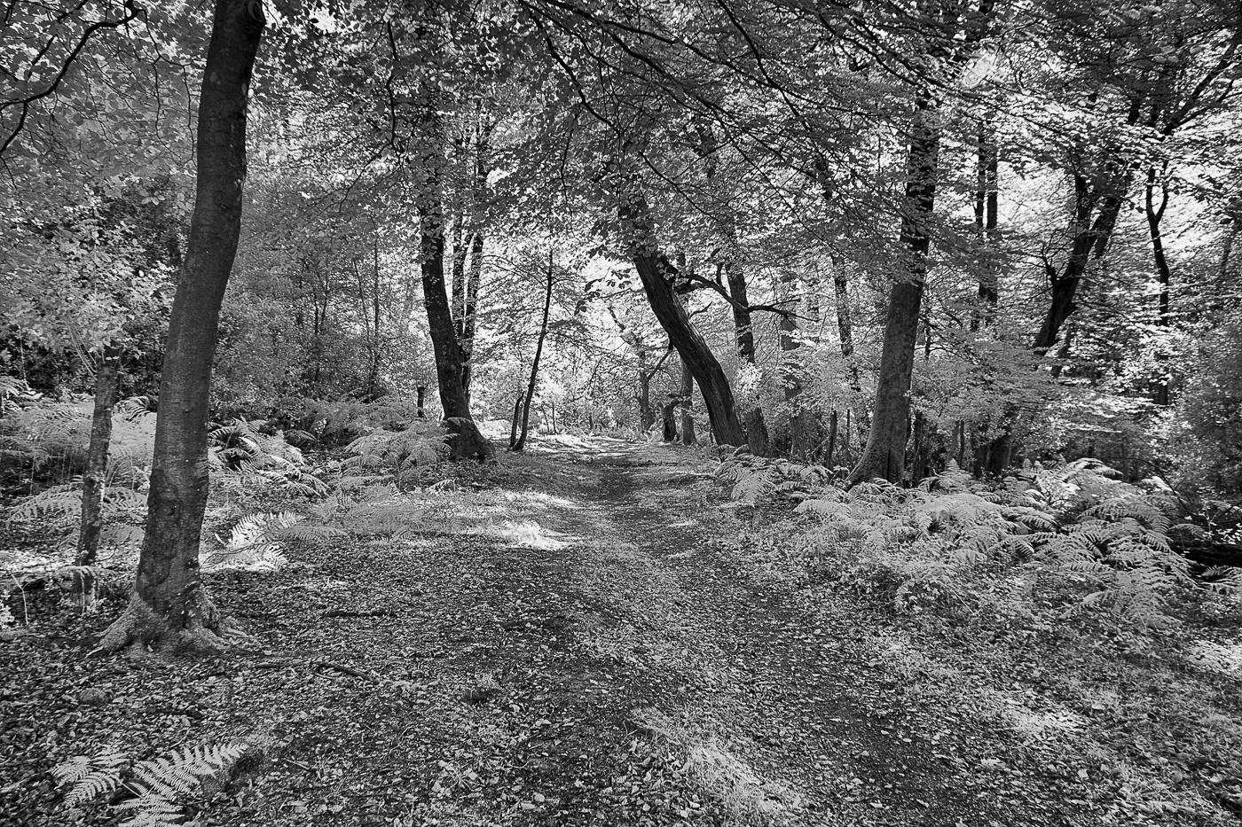 Dappled light on quiet path